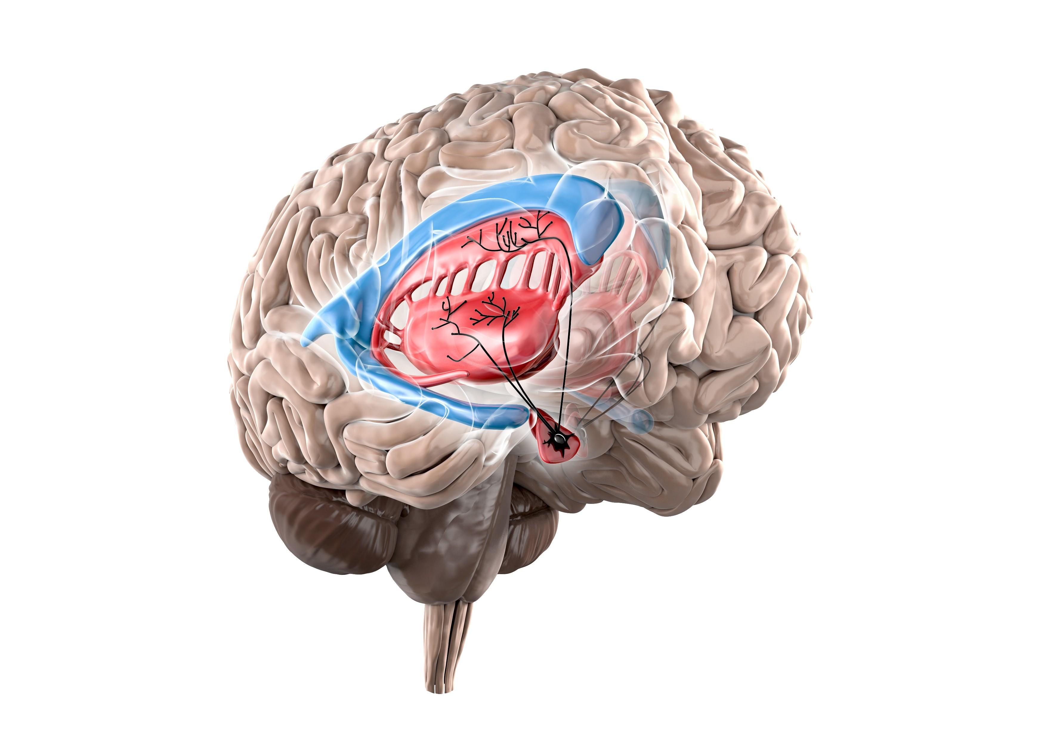 Medizinische 3D Visualisierung