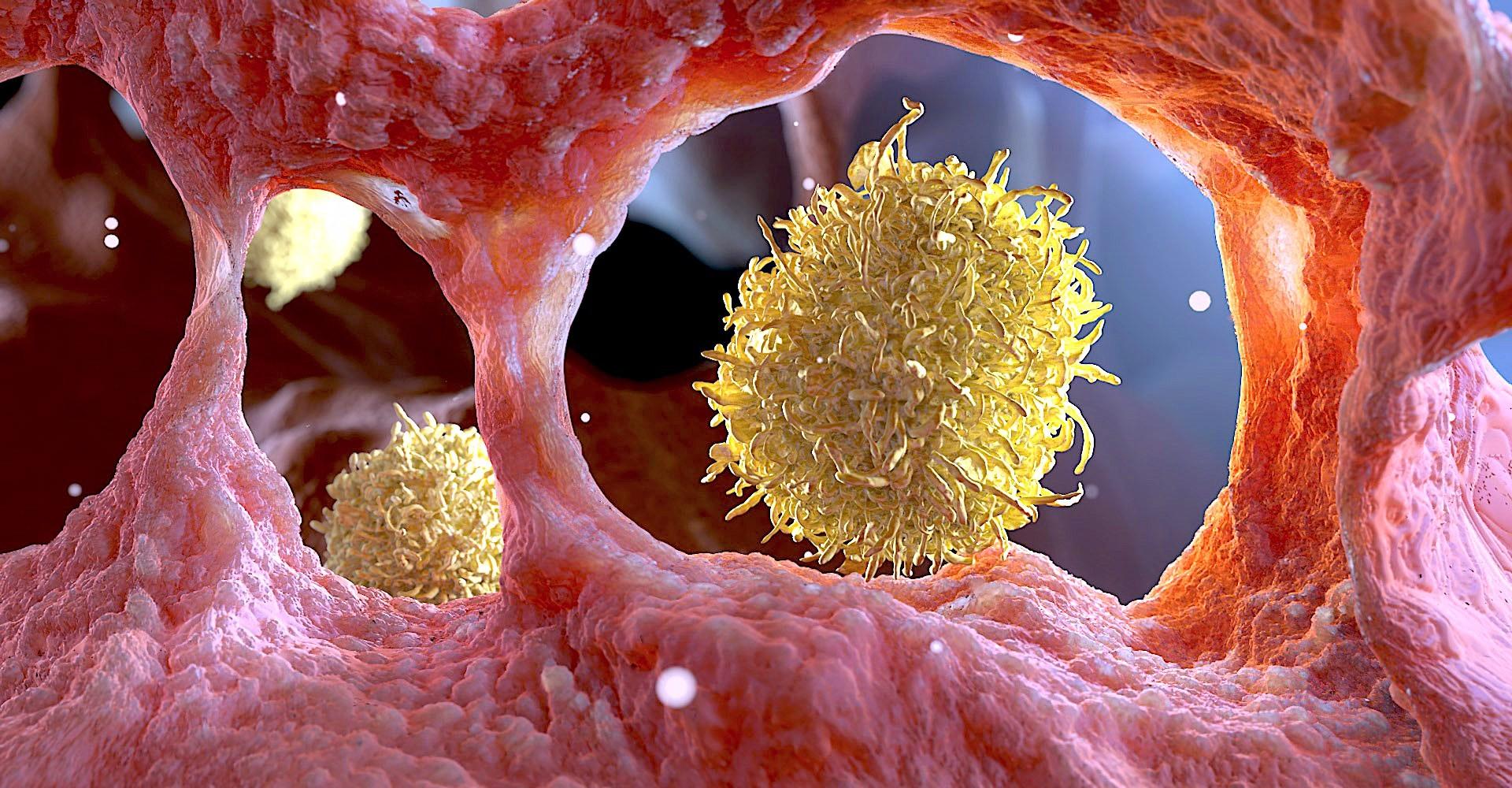 Makrophage cgi polyverse - Home